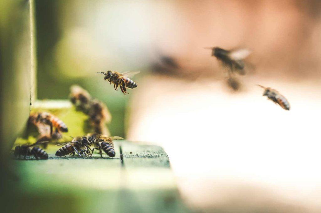 Bilde av bier som jobber